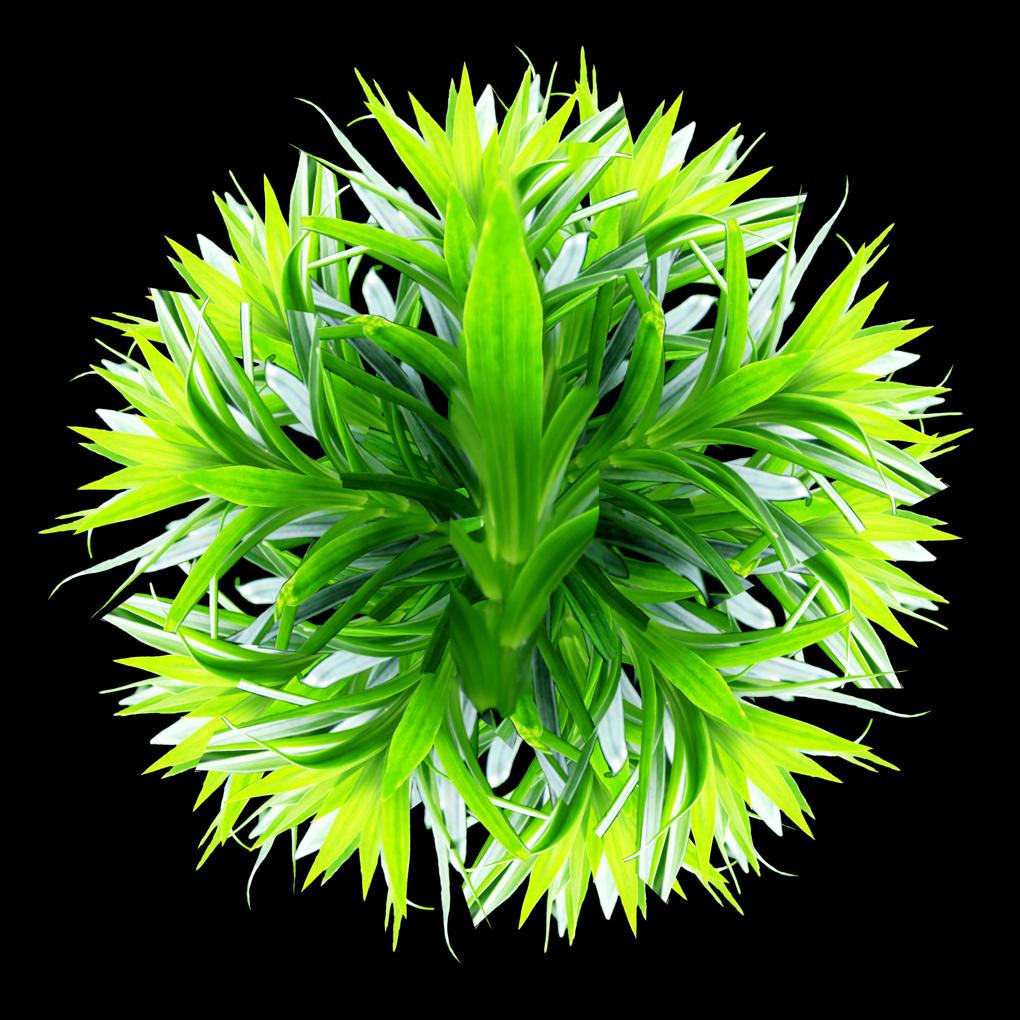 Green Ballare Pic