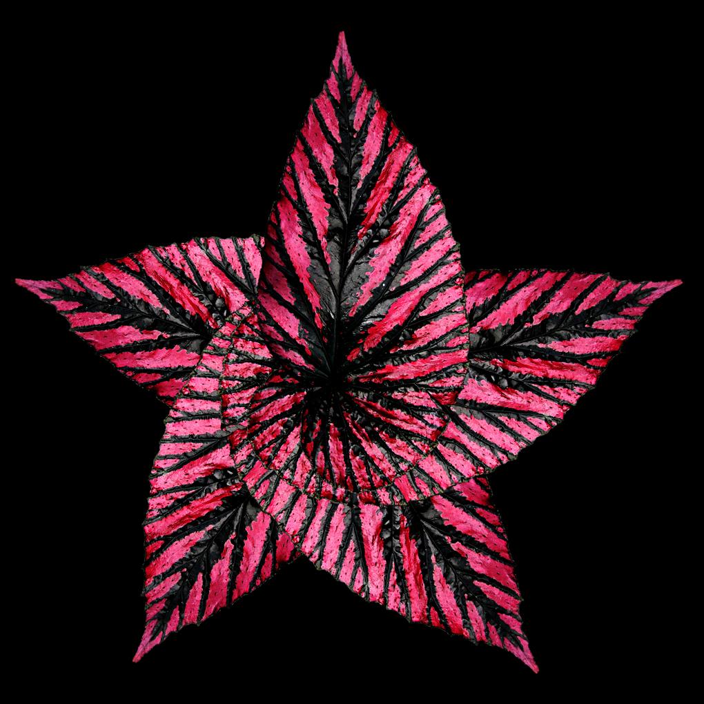 Pentagrammon