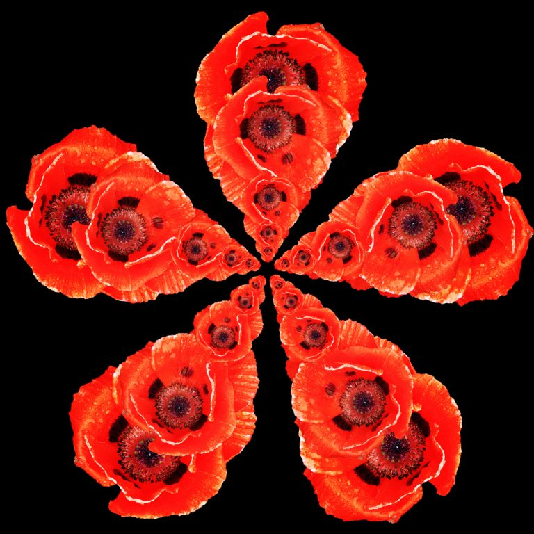 Red Petals Pic